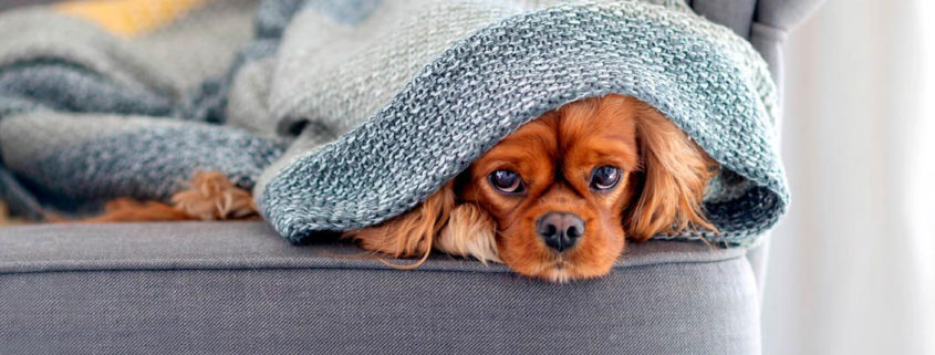 cómo calentarse en casa